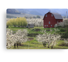 Blossoms For Miles Canvas Print