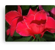 Velvety red lilies Canvas Print