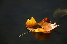 Floating... by Laurie Minor