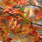 Autumn dancers by Linda Crockett