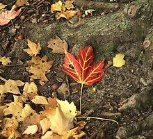 Fallen Leaves  by Chris Coates