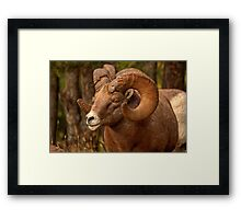 Battle Ram Framed Print