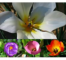 Flowering Bulbs Collage Photographic Print