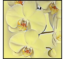 "A series of ""Favorite pillows """"Yellow Orchid""  Photographic Print"