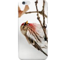 Winter Redpoll iPhone Case/Skin