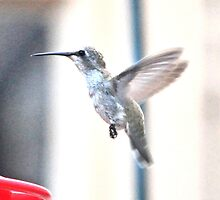 ANGEL WINGED ANNA'S HUMMINGBIRD by JAYMILO