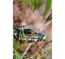 goanna. Photographic Print