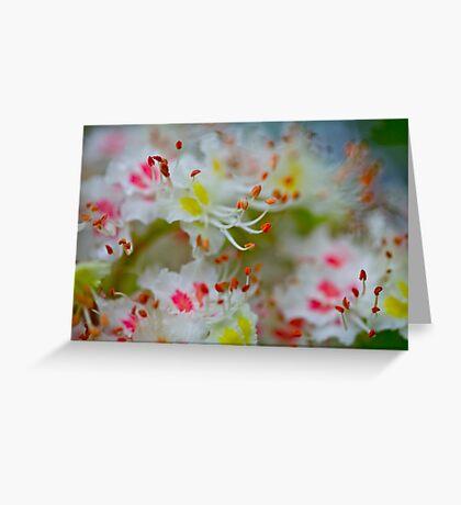 Poetry of the spring. by Brown Sugar. Boulevard View of Broken Dreams . Yeah!!! 1992 views. Favs (5). Greeting Card