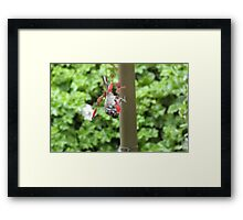 'HI THERE I CAN SEE YOU!' Cheeky wave from Honeyeater! Framed Print