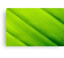 Macro shot of green leaf texture, nature background Canvas Print