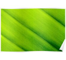 Macro shot of green leaf texture, nature background Poster