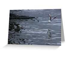 seagull on lake Greeting Card