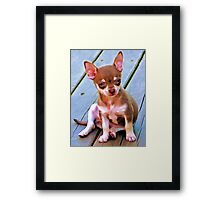 Coco,.....So Serious ! Framed Print