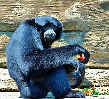 Siamang Having A Snack by Cynthia48