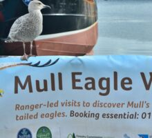 Why Not A Gull Watch For A Change? Sticker