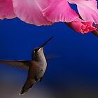 IN THE PINK by RoseMarie747