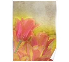 Spring Tulips in Pastels Poster