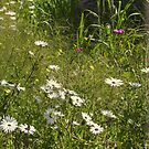 Growing Wild in York by Elaine Teague