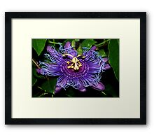 Swirl of passion Framed Print