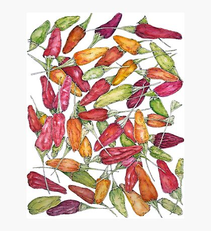 Chilly harvest-2 Pen,Ink & Watercolour Photographic Print