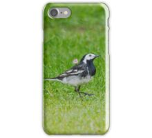 Pied Wagtail iPhone Case/Skin