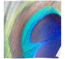 peacock feather macro Poster