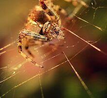Hunter in the garden on the stem by JBlaminsky