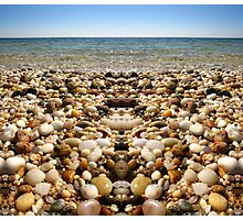 Shells on a Beach Photographic Print