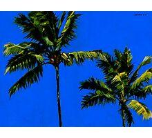 Coconut Palms 3 Photographic Print