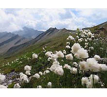 Beautiful nature mountains flowers Photographic Print