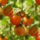 Garden Cherry Tomatoes Nature Pattern by SmilinEyes