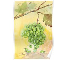 Picture a Vineyard Poster