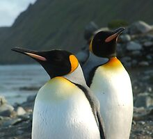 King Penguins, Macquarie Island by harryleviathan