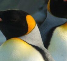 King Penguins, Macquarie Island Sticker