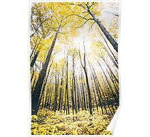 Yellow Trees  Poster