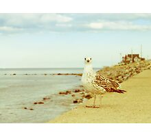 Coastal Living Photographic Print