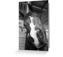 Many Sides of the Equine Greeting Card