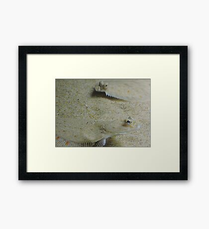 Seeing In The Sand Framed Print