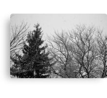 black and white snow trees Canvas Print
