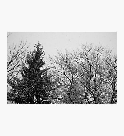 black and white snow trees Photographic Print