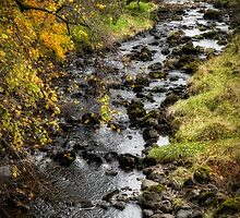 Autumn Colours in Scotland by Jeremy Lavender Photography