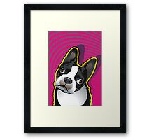 quizzical Bailey Framed Print