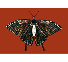 swallowtail butterfly terracotta Photographic Print