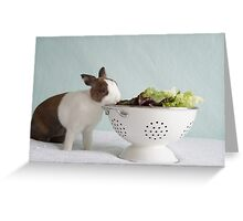 Bunny vs Veggies  Greeting Card