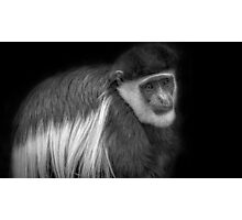 Mantled Guereza in Black and White Photographic Print