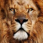 A True King by BigCatPhotos