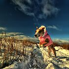 Dog in snow by Richard Lewis
