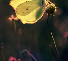 Golden wings by JBlaminsky