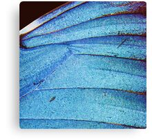 blue butterfly wing Canvas Print