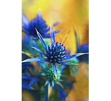 yellow blue Photographic Print